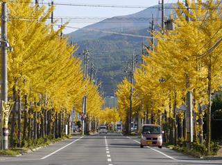 gold leafs.jpg
